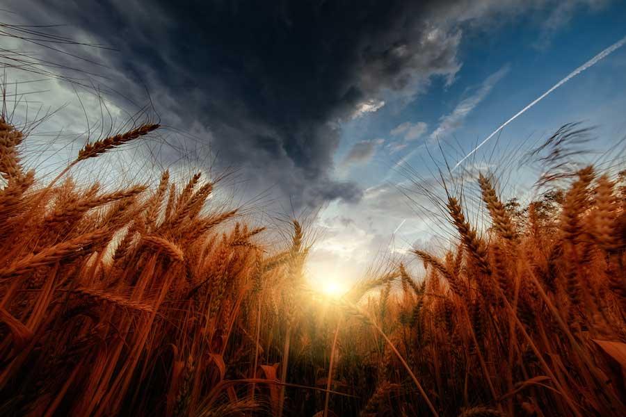 Европейский проект позволил фермерам увеличить прибыль