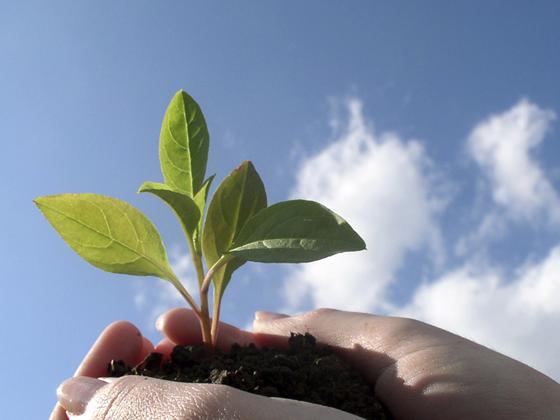 Роскачество опубликует первые стандарты на экологически чистую продукцию в августе