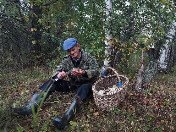 Минсельхоз не планирует ограничивать сбор грибов и ягод