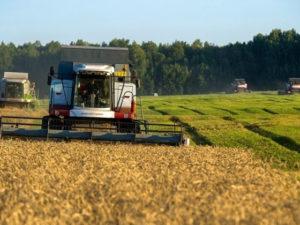 Компенсация российским аграриям в 2020 году запланирована в объеме 34 млрд рублей