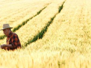 В Словении будут субсидировать экологические фермы
