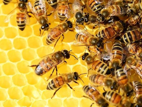 Пчелки гибнут